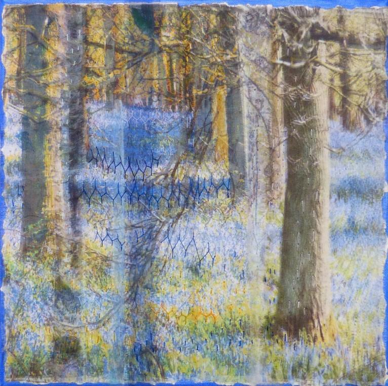 Bluebell Wood £320